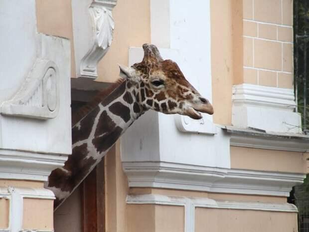 Москва онлайн покажет животных-долгожителей в столичном зоопарке