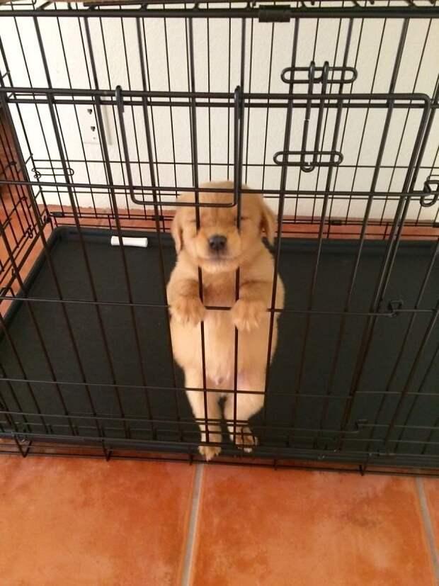 50 оттенков умиления! ;) Презабавнейшие щенки, которые никого не оставят равнодушными…