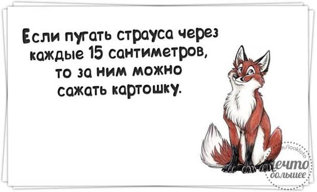 1427224857_frazki-10 (604x367, 77Kb)