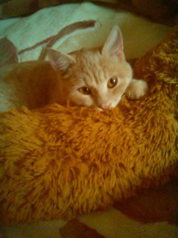 Рыжий котенок даже не мог пить от боли кот, котенок, кошка, рыжий кот