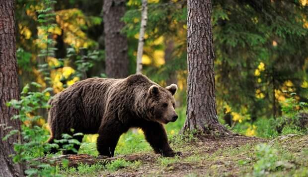 Составлен топ самых опасных хищников Петербурга и Ленобласти