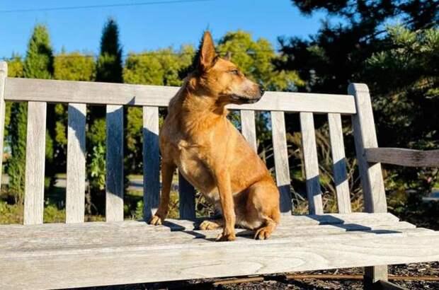 Хозяин бросил пса в парке, привязав его в скамейке, а рядом оставил записку