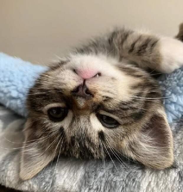 Котенок жмурится