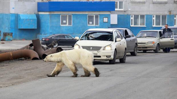 7 диких животных, которых можно встретить в российских городах (ВИДЕО)