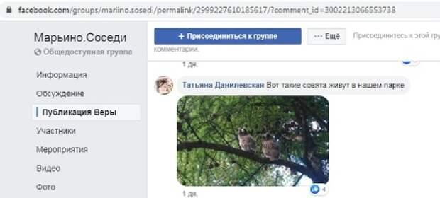 В парке 850-летия Москвы заметили совят