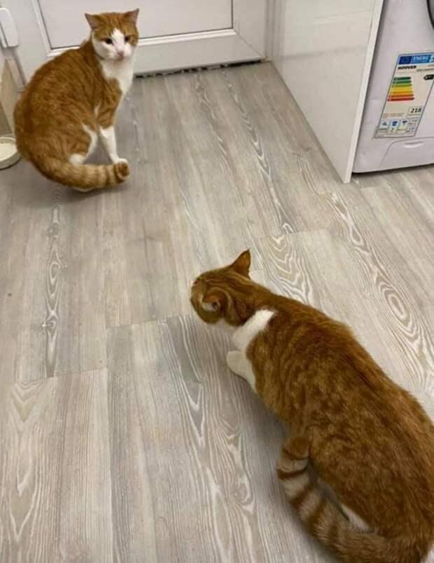 Доказательства того, что животные могут подкинуть сюрприз там, где его не ждешь