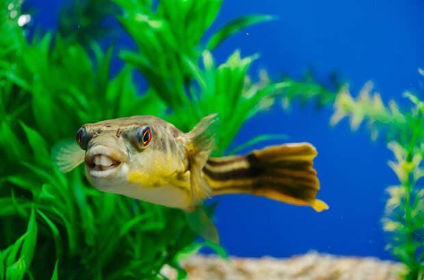 Невзгоды начинающего аквариумиста