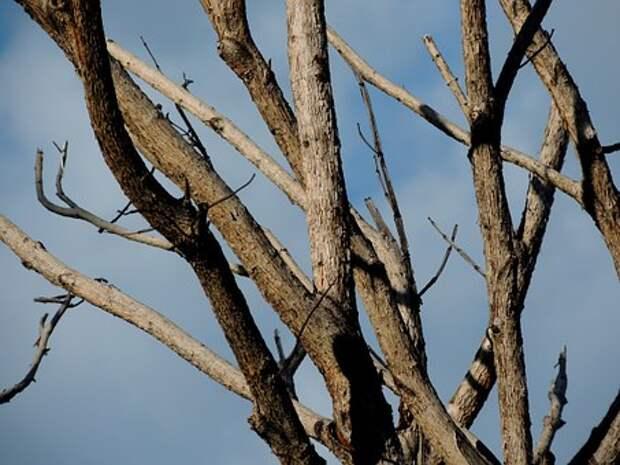 Сухое Дерево, Сучки, Дерево, Падение