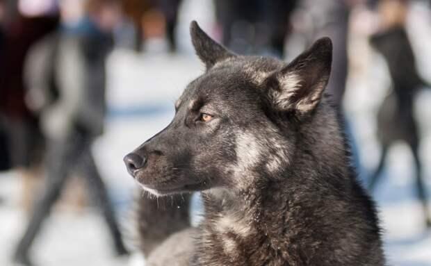 Кто знает об одиночестве больше голодной бездомной собаки? Малыш с добрым сердцем сумел понять пса и спасти его от беды