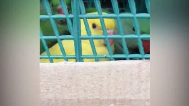 Находящихся награни исчезновения попугаев изъяли уводителя вРостовской области