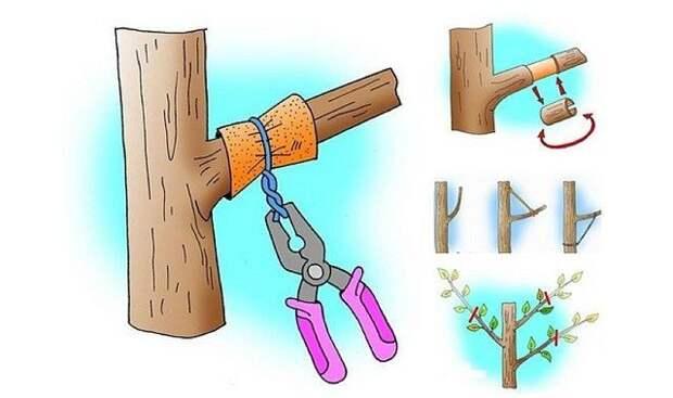 Способ, который заставит деревья плодоносить быстрее