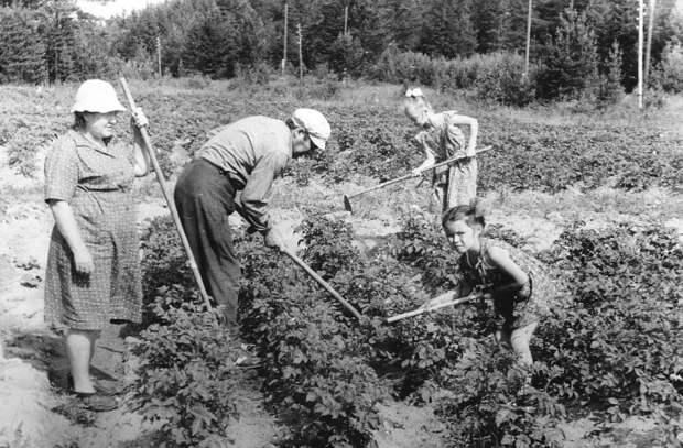 Почему в Советском Союзе под дачу выделяли строго 6 соток земли