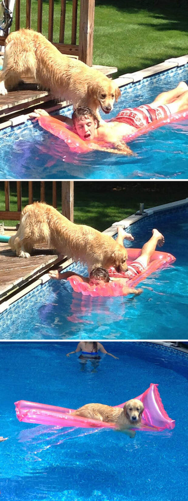 Дай  поплавать!