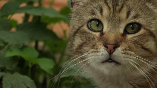 Москвичка выбросила из окна более 20 кошек и угрожала суицидом