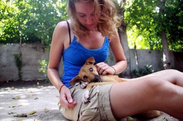Парализованной собаке Поппи довелось ползти не один километр, надеясь на помощь!