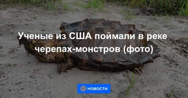 Ученые из США поймали в реке черепах-монстров (фото)
