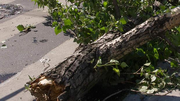 В Москве из-за упавших деревьев по некоторым улицам не ходят трамваи
