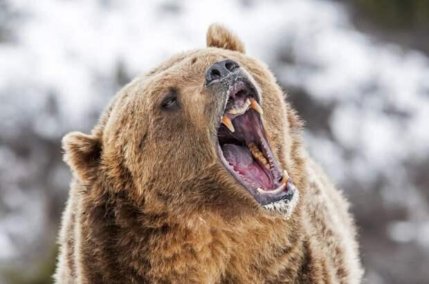 Не дразни русского медведя!