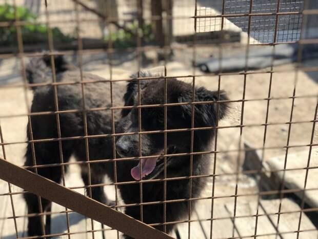 Догхантер Кулагин раскритиковал лояльность законодательства к бродячим собакам