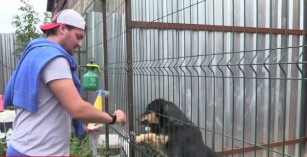 У него есть всё, а у собак — только клетка… Ты удивишься, узнав куда тратит деньги бывший хоккейный вратарь «Спартака»