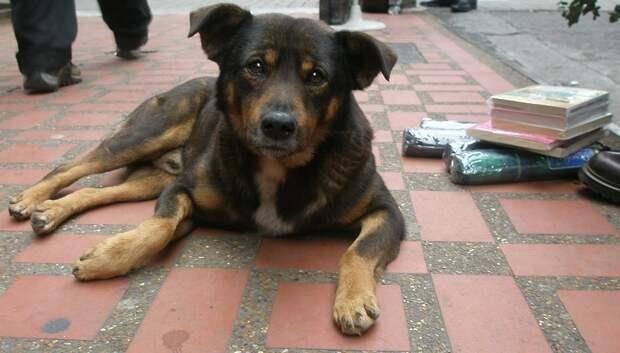 Трех бездомных собак отловили в Гулевском проезде по просьбе жительницы