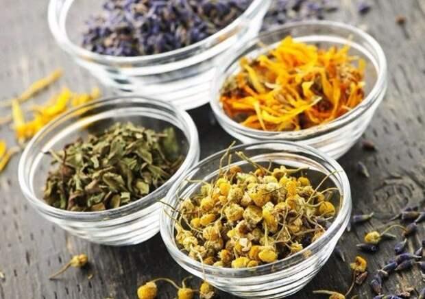 Семь лечебных трав которые необходимы в домашней аптечке