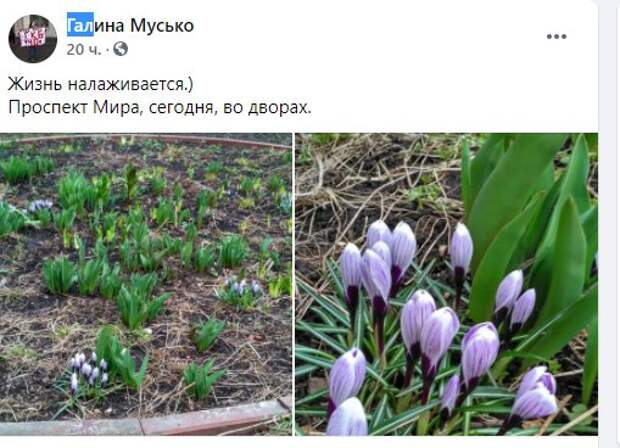 Фото дня: на проспекте Мира расцвели крокусы