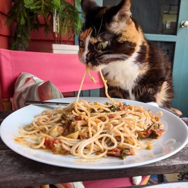 Вот доказательства, что кошки и странности — это синонимы!