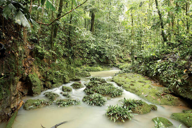 Самые большие джунгли в мире. Тут 30% всех видов животных и растений планеты