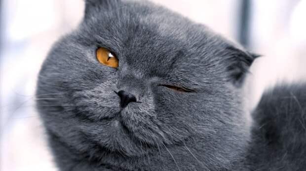 Жизнь с котом, или как не сойти с ума от одиночества.5
