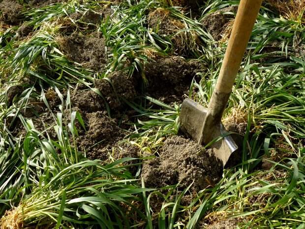 Сброженный настой из сорняков – универсальное удобрение, доступное каждому огороднику