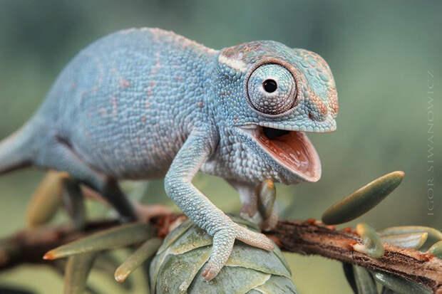 cute-baby-chameleons-582c6e8c83ed9__700