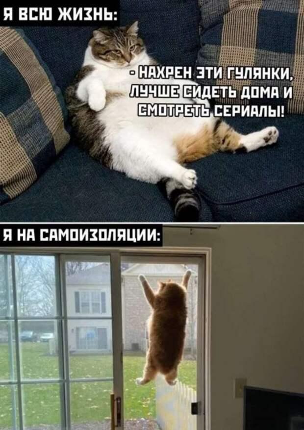 Смешные комментарии. Подборка chert-poberi-kom-chert-poberi-kom-51410623082020-9 картинка chert-poberi-kom-51410623082020-9