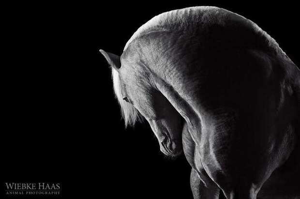 Сила животные, искусство, лошади, фотография