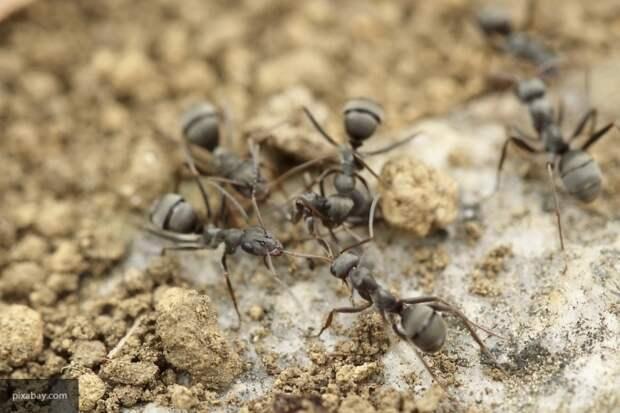 Эксперты рассказали, как избавиться от муравьев на даче