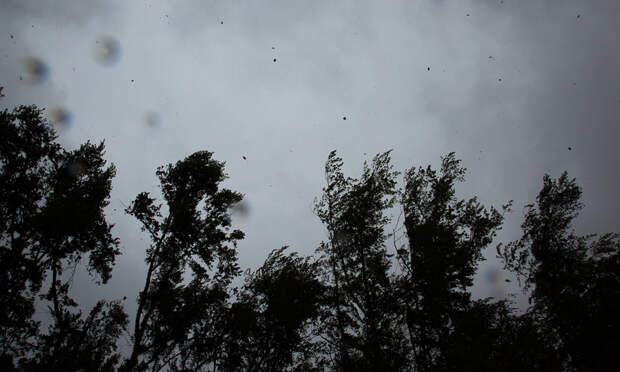 Порывистый ветер, ливни, грозы: 15 и16июня Архангельску грозит плохая погода