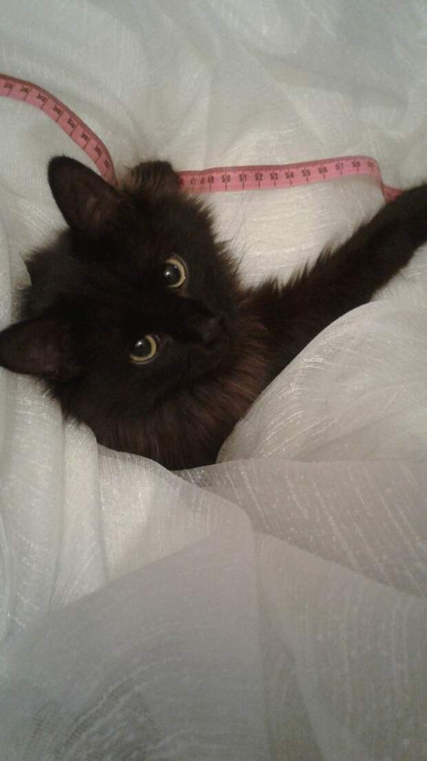 Как котёнок «Чудо Сибирское» стал домашним