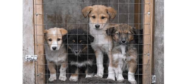 Содержание частных приютов для бездомных животных не возбраняется – Тургумбаев