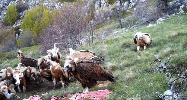 Хищным птицам в крымских горах скормят 3 тонны мяса в этом году