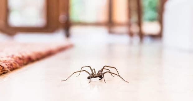 Почему вы никогда не должны убивать пауков в вашем доме