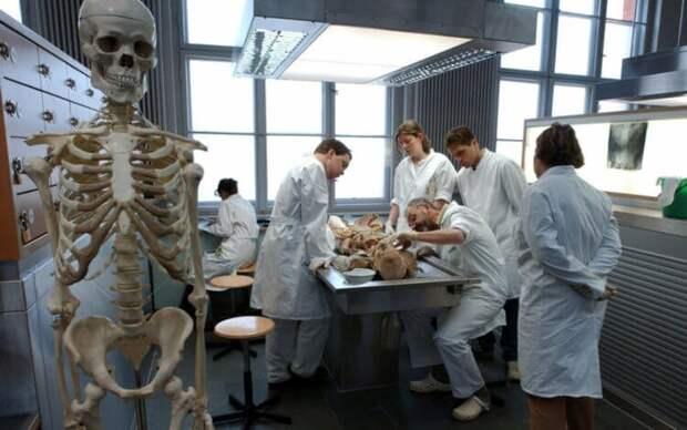 Что произойдет с телом, если завещать его науке?