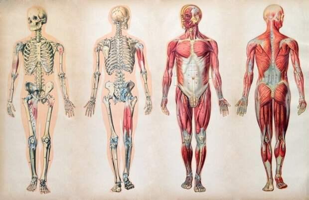 Нужные ненужности: части организма, которые больше не используются людьми