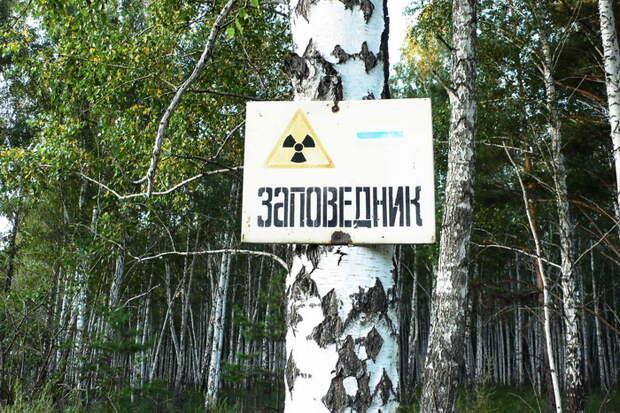 Заповедник на территории, пострадавшей от радиации. Фото: Info-Farm.RU