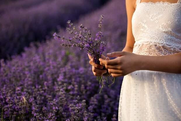 Лаванда, Природа, Цветы, Растения, Фиолетовый, Лето