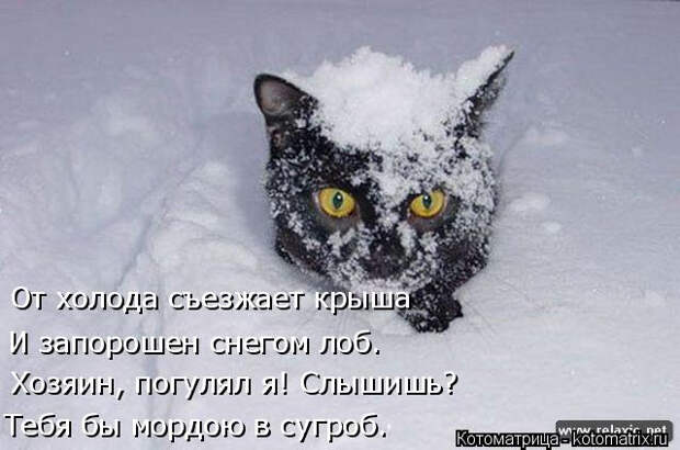 kotomatritsa_u (1) (640x424, 135Kb)