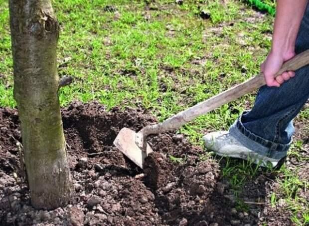 Удобрение дерева