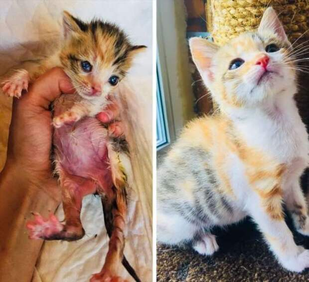 20+ животных, которые получили дом и наградили за это тонной любви