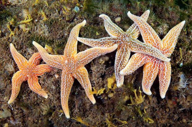 Жители холодного океана