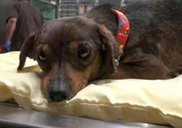 Одинокий пес жил у железной дороги, в опасной близости от поездов