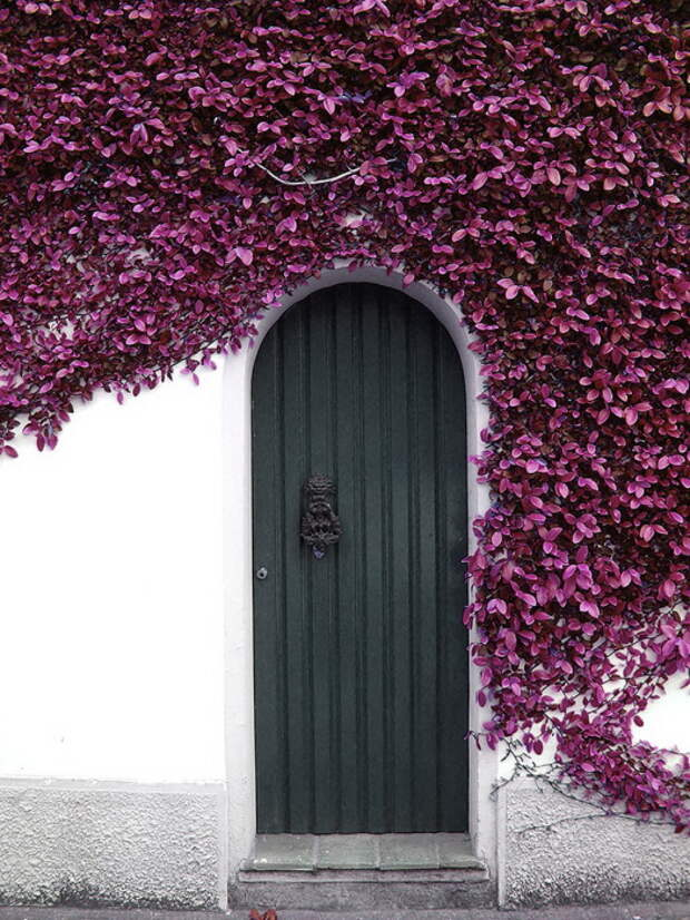 Разросшийся куст вокруг двери напоминает бабочек.